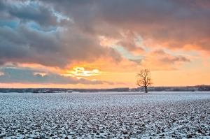 1409521_oak_tree_on_snowy_fields_at_sunset