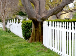 1416428_fence_series_8